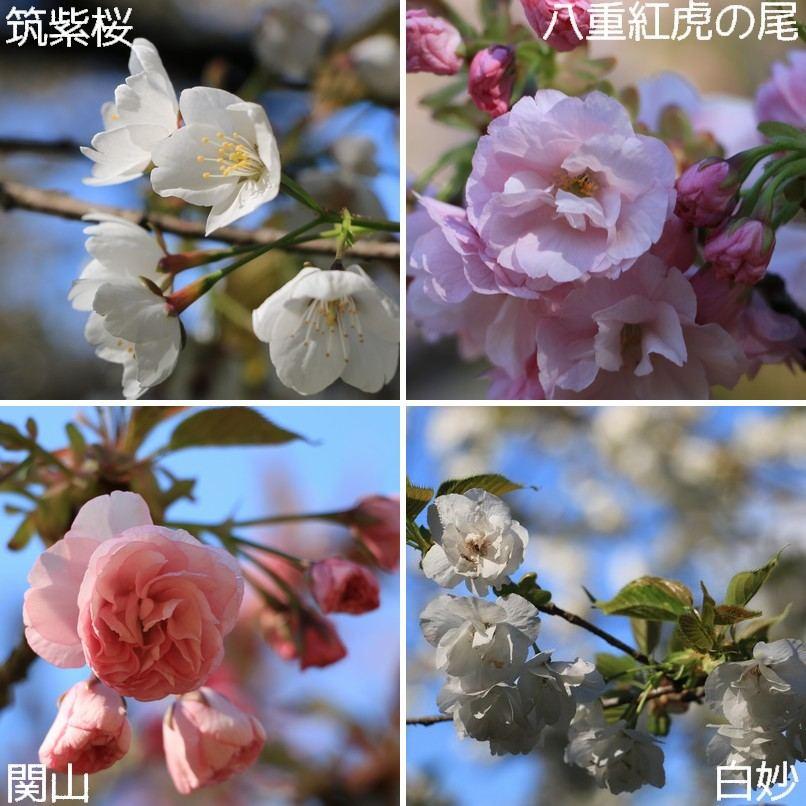 大峰山桜公園2017♪