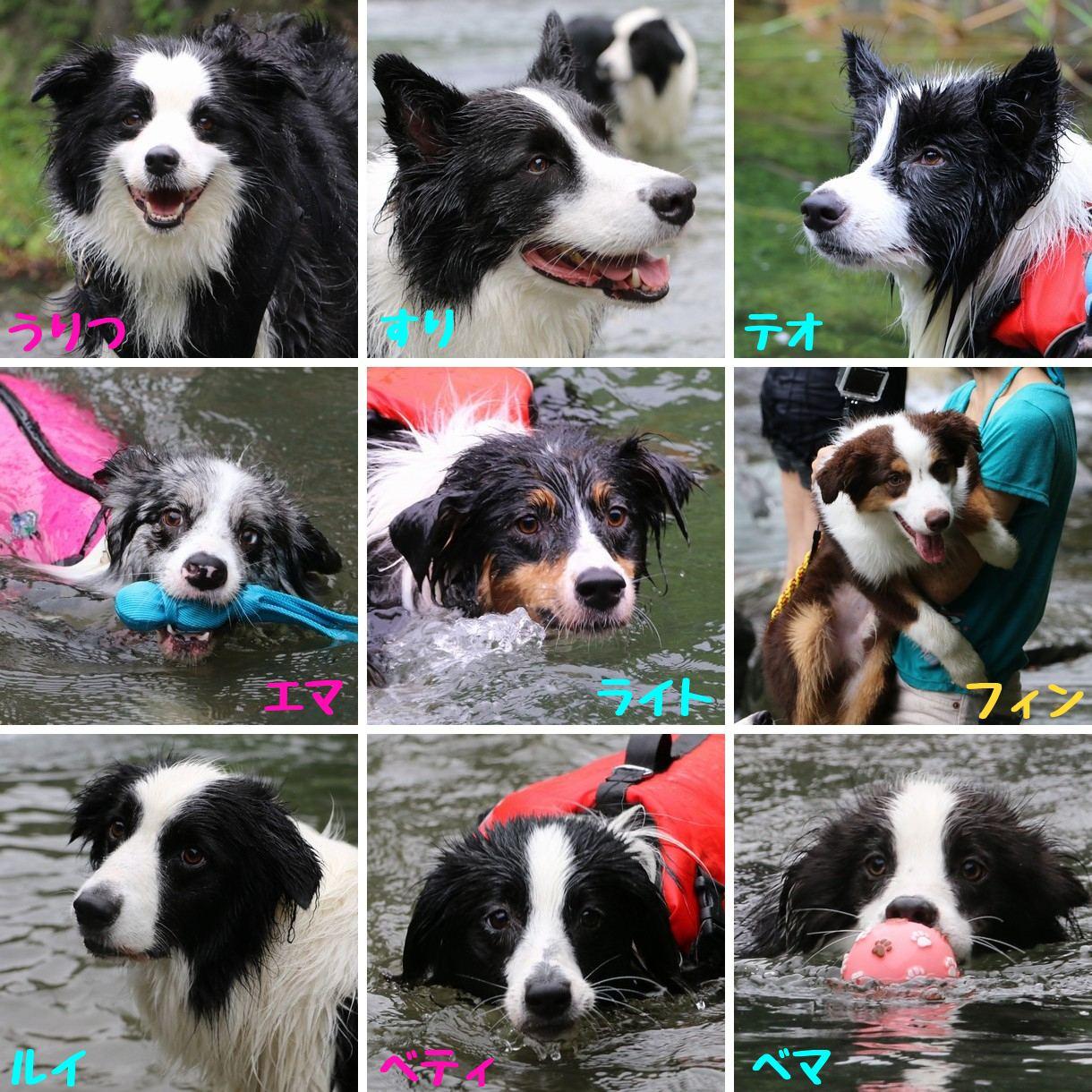ボーダー渓谷水泳部2017
