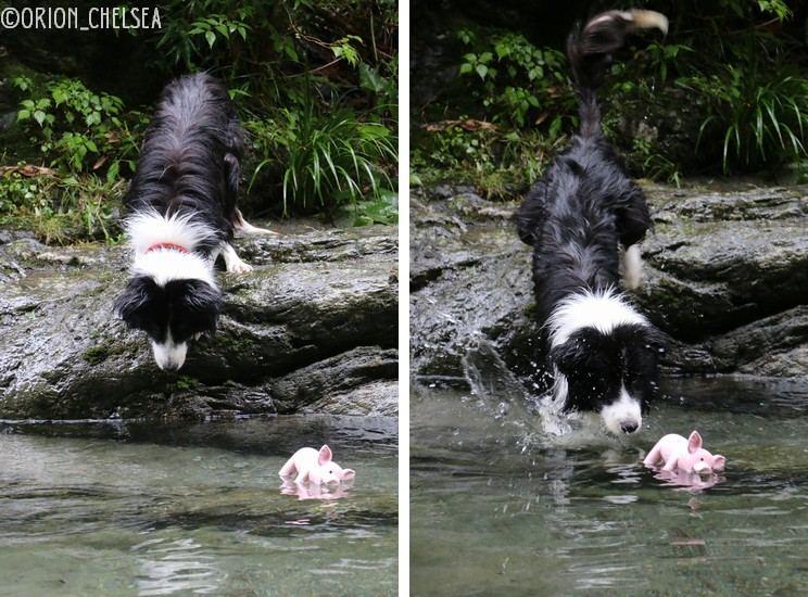 テオ君と泳ごう!
