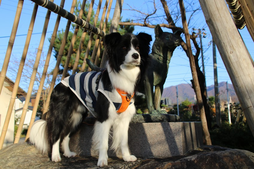20181118_忠犬タマ公像