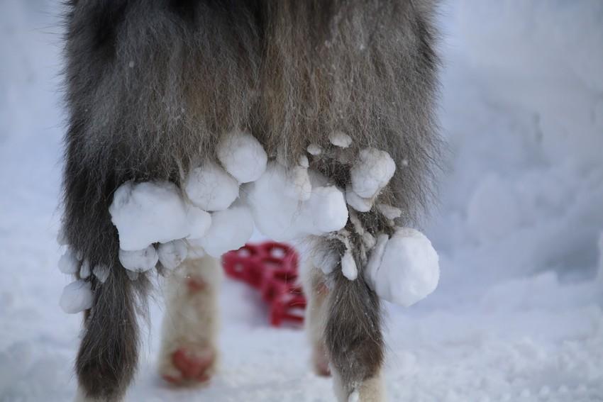 雪玉だらけの卵産み