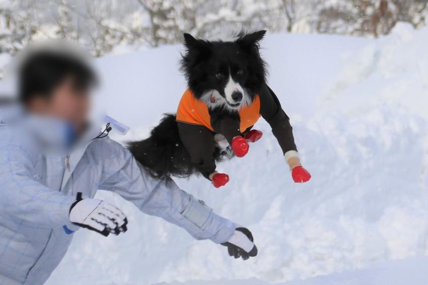雪の中に放り投げられるエルマーナちゃん