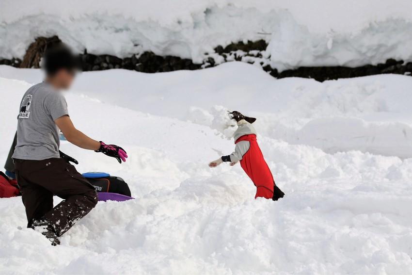 雪玉で遊ぶリリスちゃん