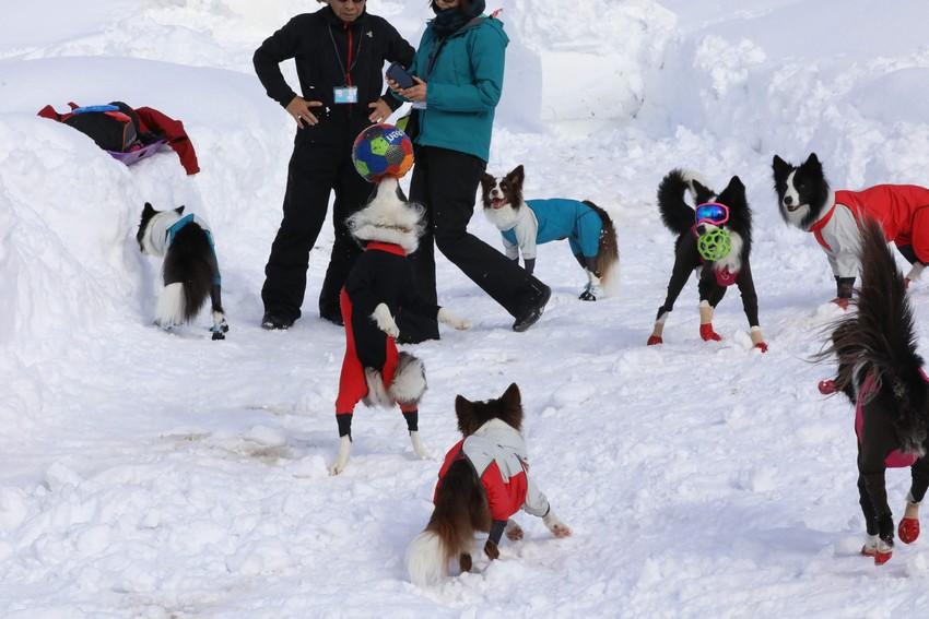 MAIKO雪遊び