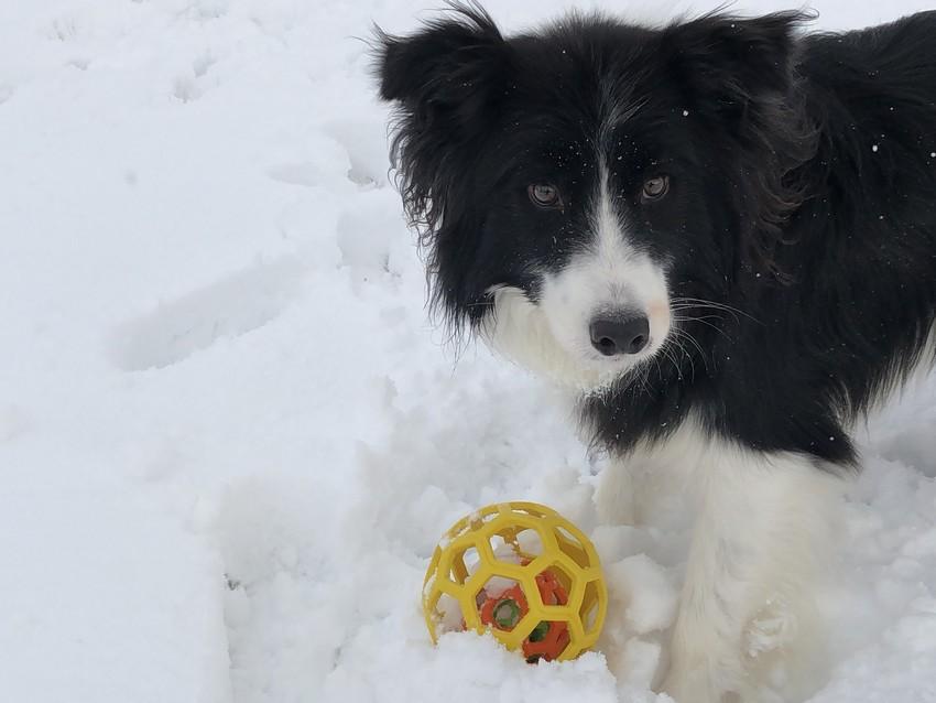 積雪の河川敷で遊ぶDawn太