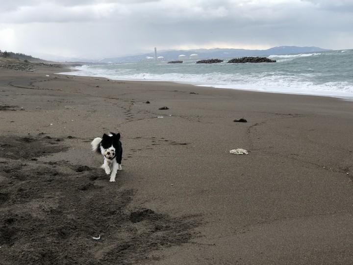 鵜の浜海岸で遊ぶDawn太