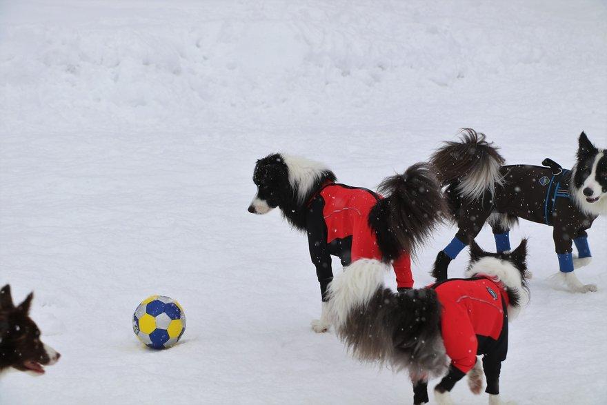 アマリリス家のサッカーボールを巡って