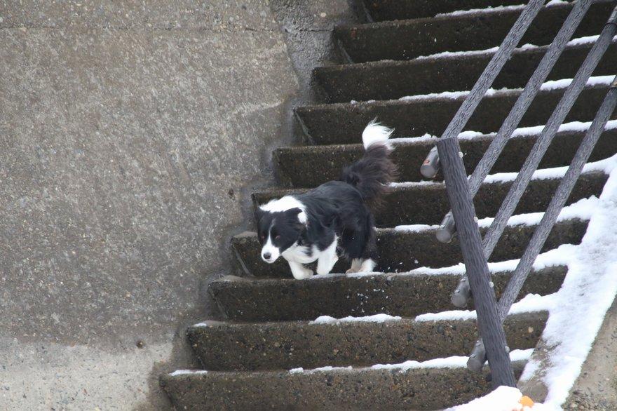 海岸への階段