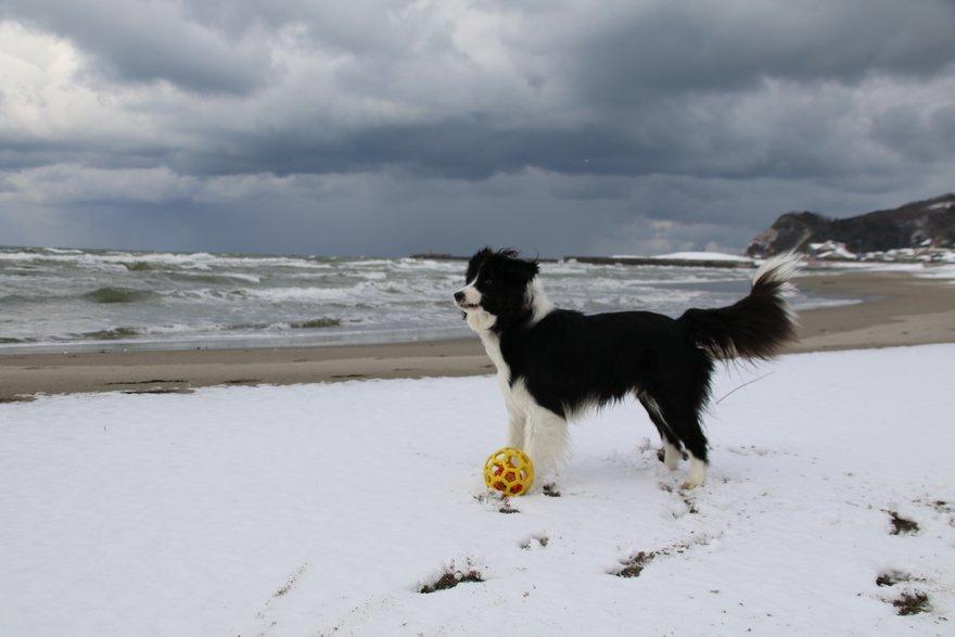雪の海岸で遊ぶDawn太