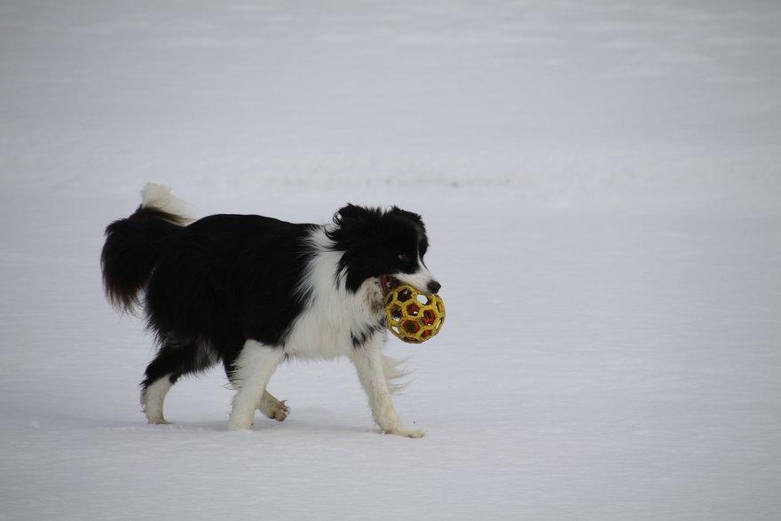 雪の海岸を走るDawn太
