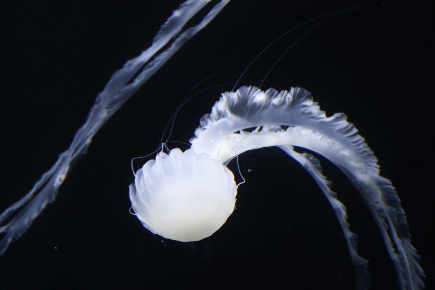 クラゲのイナバウアー