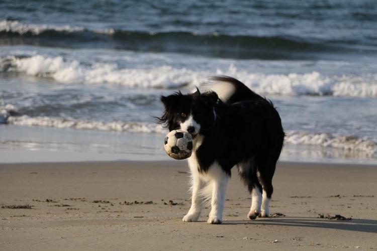 佐渡おけさを踊る犬