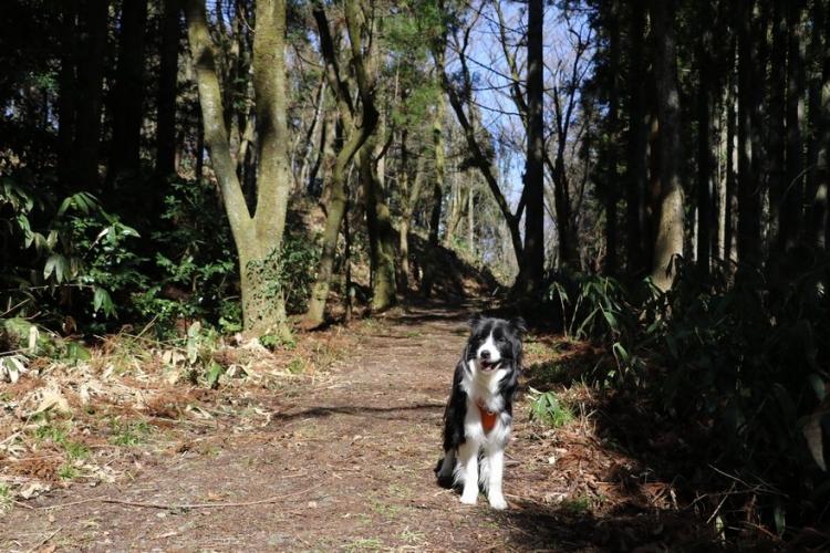 Dawn太と山歩き