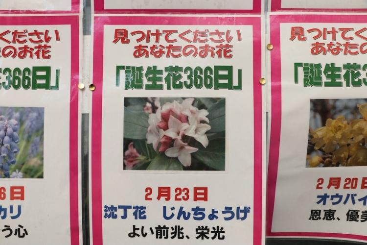 366日の花