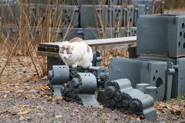 やきもの広場で出会った猫