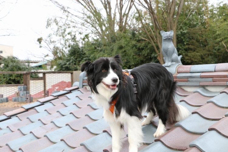 屋根にのったDawn太