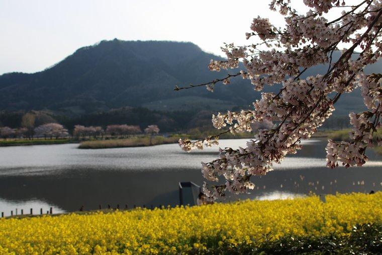 角田山と上堰潟
