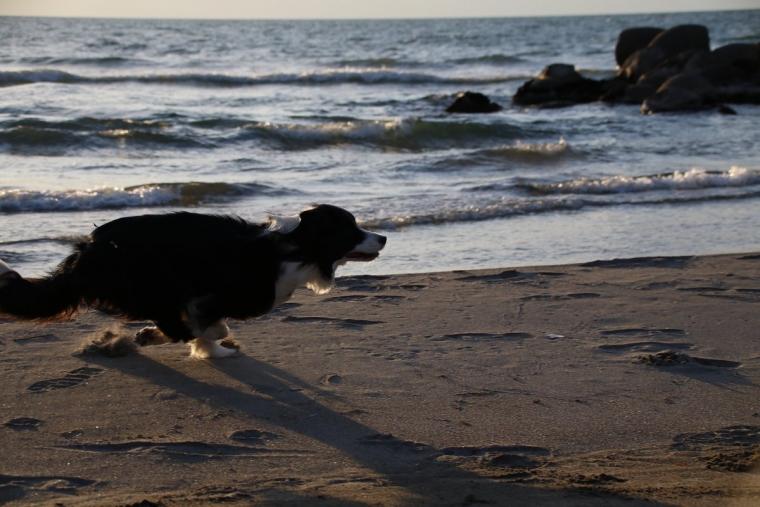 砂浜をダッシュするDawn太