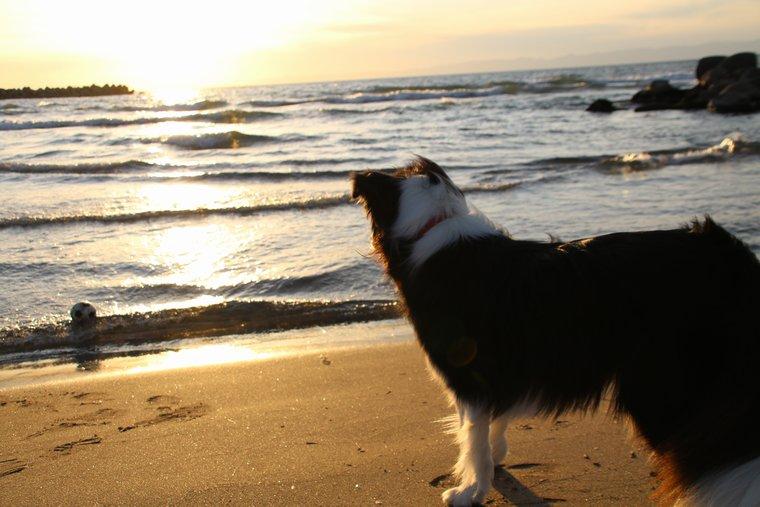 海に落ちたボールを見つめるDawn太