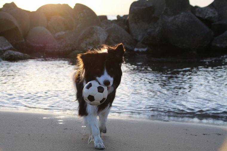 ボール救出