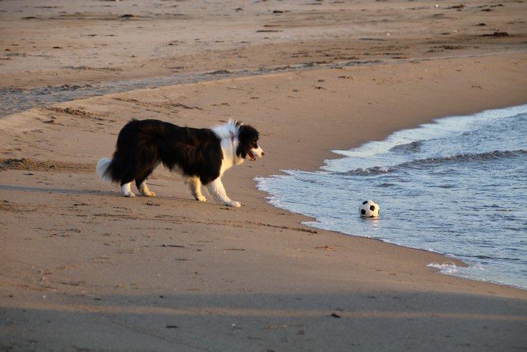 またボール海に落としてる