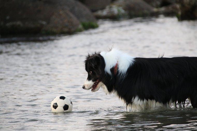 海に落ちそうなボール