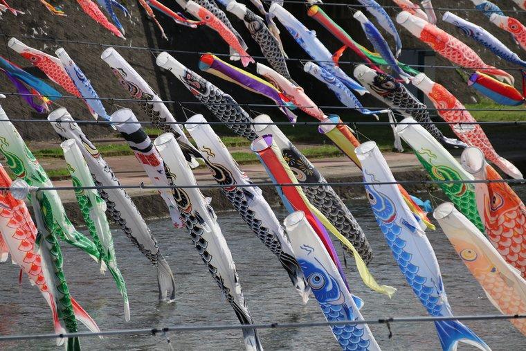 加茂川を泳ぐ鯉のぼり