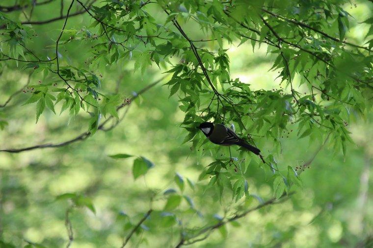 新緑の中を飛ぶ鳥