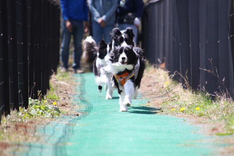 弟を追い抜き先頭を走るDawn太