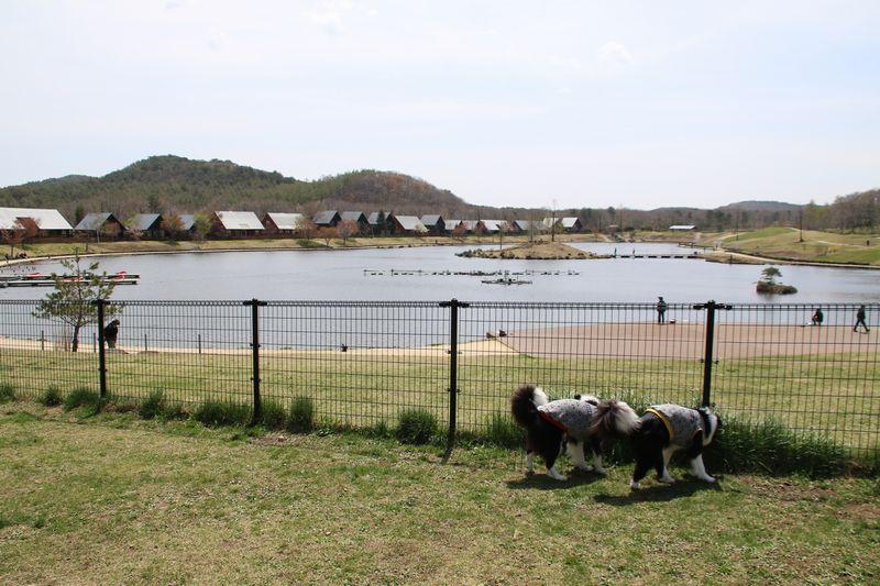 エンゼルフォレスト那須白河の湖畔のドッグラン