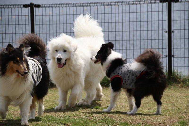 レオンくんと大型犬たち