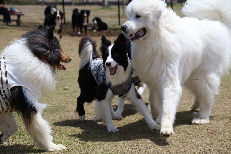 テオくんと大型犬たち