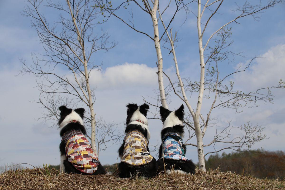 白樺の木の前でお揃い服に身を包む三兄弟