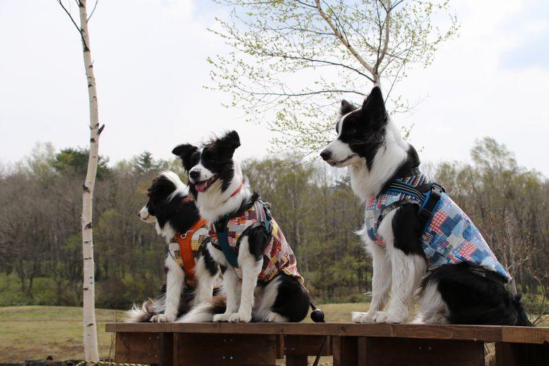 小島中央のベンチで記念撮影の三兄弟