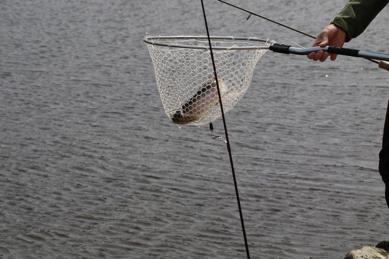 人造湖でニジマスを釣り上げた瞬間