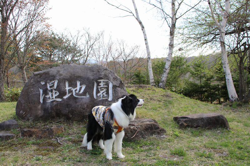湿地園の石碑とDawn太