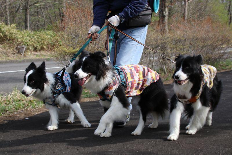 並んで散歩する三兄弟