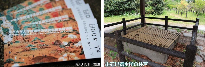 再現♪小石川植物園へ行ってみました2♪
