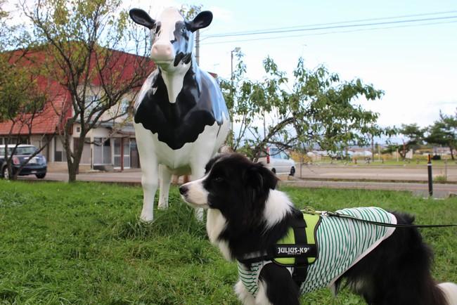 会津のべこの乳 アイス牧場