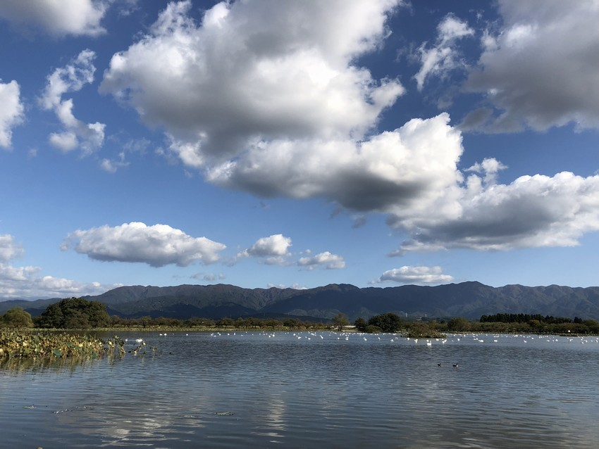 瓢湖2018