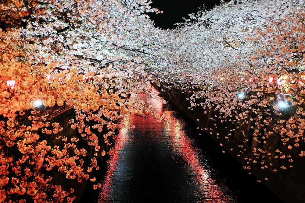 目黒川 桜ライトアップ