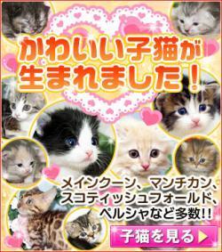 宮城県ペットショップ鈴花/子猫情報