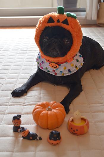 かぼちゃにされた