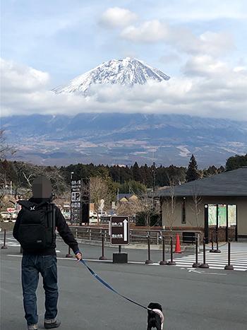 富士山頭だけ見えた