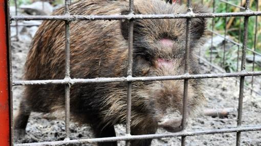0815猪1812241