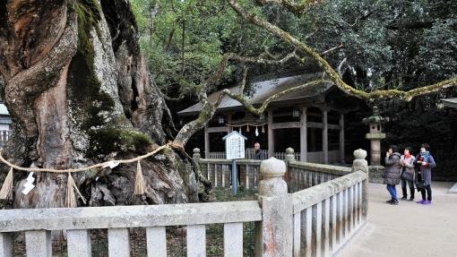 1555大山祇神社192172