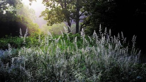 1926 霧が谷1962012