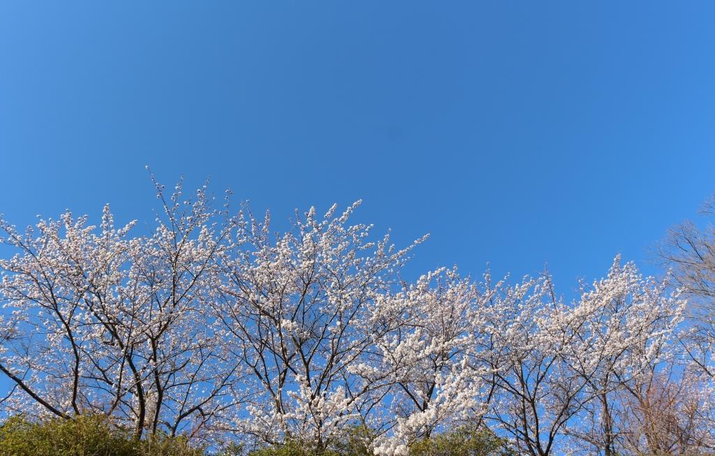 凛桜*Rioプロフィール