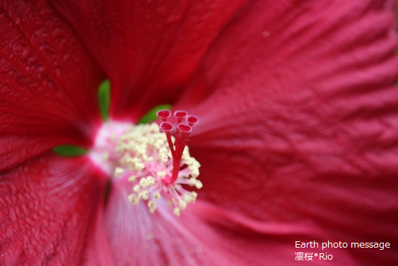 Earth photo message68 心・真・芯