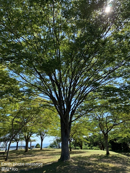 Earth photo message81 木はファミリー